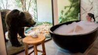 狗熊看你洗澡,鲨鱼陪你睡觉,这家酒店就真的做到了,太刺激了!