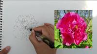 丹青纸墨轩:洛阳牡丹花正开,国花园中写生彩,国画牡丹线描