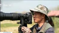 濒危黄嘴河燕鸥雏鸟顺利破壳,当地保护部门加强保护