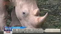 保护珍惜物种 我国一则48秒白犀牛视频 引发全世界关注点赞