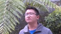 """云南贡山:水鹿随牛群""""回家""""  相机记录珍贵影像"""