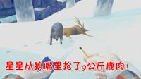 漫漫长夜19:星星引狼杀鹿,抢了9公斤鹿肉!