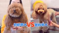 这是同一只狗狗吗?奶奶带大的跟爸妈带大的区别咋那么大?