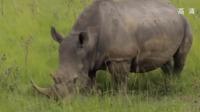 人工智能技术精准分析偷猎者,为南非犀牛护航!