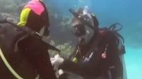 澳小伙大堡礁水下向伴侣浪漫求婚,结束爱情长跑抱得美人归!