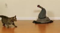 二货主人在家里放了一条假蛇,猫咪好奇凑过去,接下来搞笑的一幕发生了!