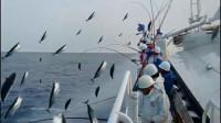 日本人海上捕金枪鱼,一条接一条往上甩,颠覆你的钓鱼观!