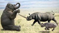 犀牛和大象谁厉害?男子目睹大象大战黑犀牛,谁也奈何不了谁