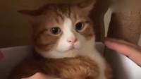 面对喜欢的人和不喜欢的区别,这只胖橘猫完美的诠释了出来!