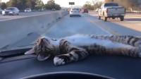 小车司机车胎发现狸花猫,收养后,从此路上再也不是孤单一人了!