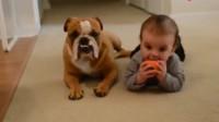 实拍国外宝宝跟宠物抢玩具玩,要是大人不在家难保狗狗会做出什么事情呢