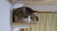 主人给小猫做的小窝,小猫高兴的躺在上面休息,太羡慕了