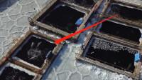 """俄罗斯惊现""""鲸鱼监狱"""",100多头鲸鱼被困在水槽,网友:看了揪心"""