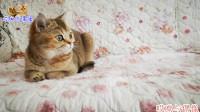 公猫沉迷游戏忘与母猫约会,母猫生气前来质问,公猫回答真是欠揍