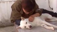 狗狗被收养后经常咬自己,知道原因后,让人心疼坏了!