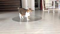 在地上画3D大坑骗猫,却被猫咪一秒破功,心疼铲屎官