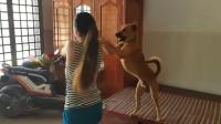小姐姐给狗狗梳毛,狗狗一个动作吓到了小姐姐,网友:真逗!