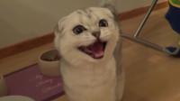 流浪小猫咪吃上了自己喜欢的猫粮,眼睛立马温顺了起来