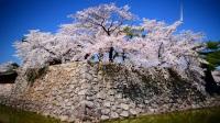 樱花盛开下的日本名城长野松代城