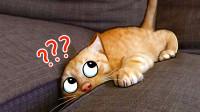 谁说猫咪高冷了?它们一旦犯傻起来,连它们自己都会害怕!