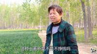 河南农村种麦不挣钱为啥还要种?大娘这么回答,听完有啥想法?