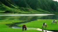南方少见的大草原,牛羊成群好像呼伦贝尔,吸引无数游客!