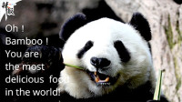 """旅美大熊猫""""白云""""的送别PARTY"""