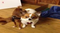 狗:兄弟,你脚是不行了吗?一定要靠在我身上?