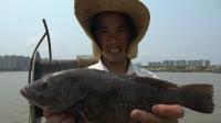 第一次用起网机试用,意外抓到石斑鱼和3只青蟹,以后收网舒服了