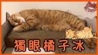 【巧克力】『橘子冰的日常』- 独眼橘子冰