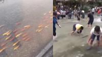 """广东暴雨后市民上街抓鱼:锦鲤排队游行 一条鱼""""跃龙门""""飞进家中"""