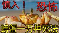 【逍遥小枫】向人类复仇?一只螃蟹的辛酸血泪史!