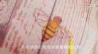 咱也不知道为什么想做一只勤劳的小蜜蜂,咱也不敢问,微缩小蜜蜂