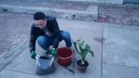 花盆小了想换花土,没想到自己家后园子里就有现成的