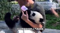 熊猫宝宝集体越狱, 眼看就要成功了, 忽然有人大吼了一声