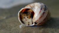 它是世界上最小的猫,体长只有4.9厘米,比手掌心还小!