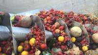 烂掉的水果是这样处理的,不知道的还以为是榨果汁呢