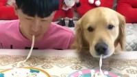 狗狗和主人比赛吃面条大战,看到这个画面,主人真的很宠溺蛋黄