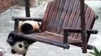 熊猫:奶爸奶爸,快来帮帮我,我被卡着了!