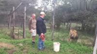 男子准备给狮子喂食,狮子的眼神却不太一样,幸好男子投食投得快