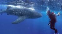 非洲海洋要塞吉布提,蓝海体验与鲸共舞