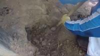 男子发现地下的小洞有动静,拿铲子挖了几下,结果太幸运了!