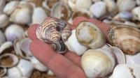 家里的贝壳没有了,大梅来到海边又捡了一些,各种漂亮的都有!