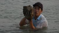 退潮后小池跳入海里捞生蚝,超大野生蚝捞一大桶,路人看了好羡慕