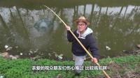 晚上在河里放十个地笼,第二天收网时逮到了一条大黄鳝,厉害了