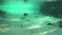 潜水男子意外发现海底铁笼,还上着锁,靠近以后真相让人愤怒