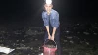 妹子大晚上去赶海心里害怕,却意外收获一桶海螺,真的没白来