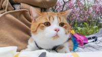 去桃花下郊游野餐,橘猫猪皮:第一次来,直接吃还是走形式?