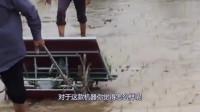 中国牛人,19岁农民小伙发明,牛拉式插秧机,一天能插秧8亩地