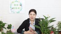 绿色花圃中的白掌盆栽,它的分株方法你了解吗,快来学习下吧